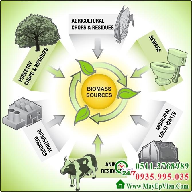 Năng lượng sinh khối Biomass nguồn năng lượng mới của tương lai